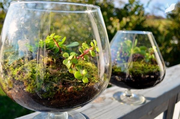 pflanzen terrarium deko für die terrasse