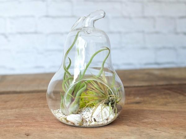 pflanzen terrarium glühbirne