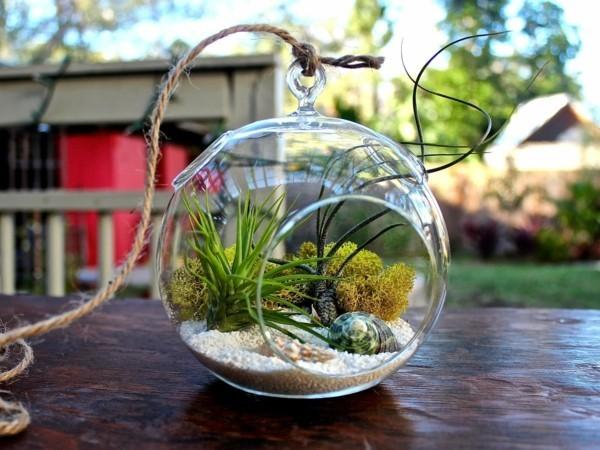 pflanzen terrarium idee für die hausdeko