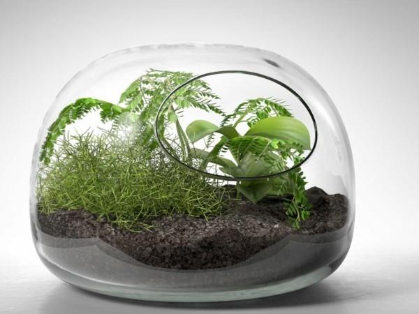 pflanzen terrarium selber machen schritt f r schritt anleitung. Black Bedroom Furniture Sets. Home Design Ideas