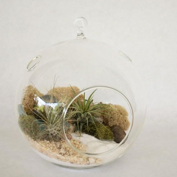 pflanzen terrarium ovale idee