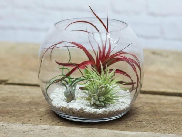 pflanzen terrarium rot grüner kontrast