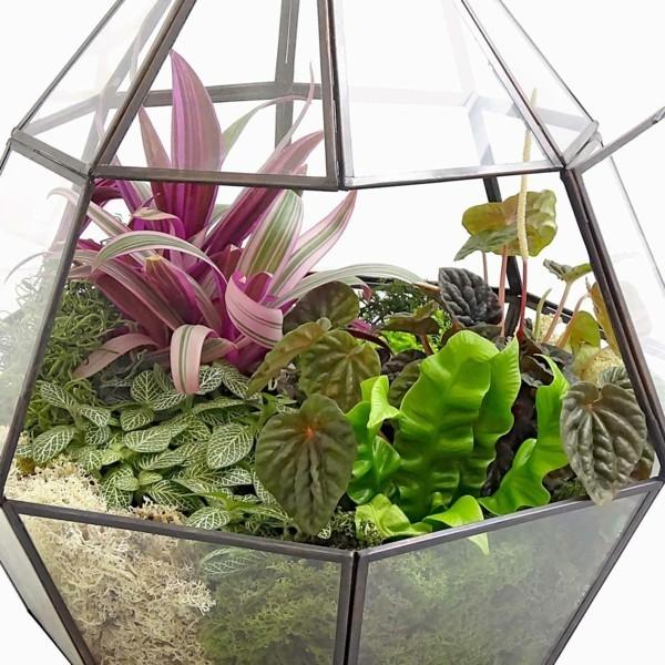 pflanzen terrarium schöne form