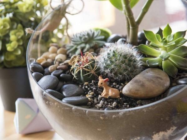 pflanzen terrarium sukkulenten und steine