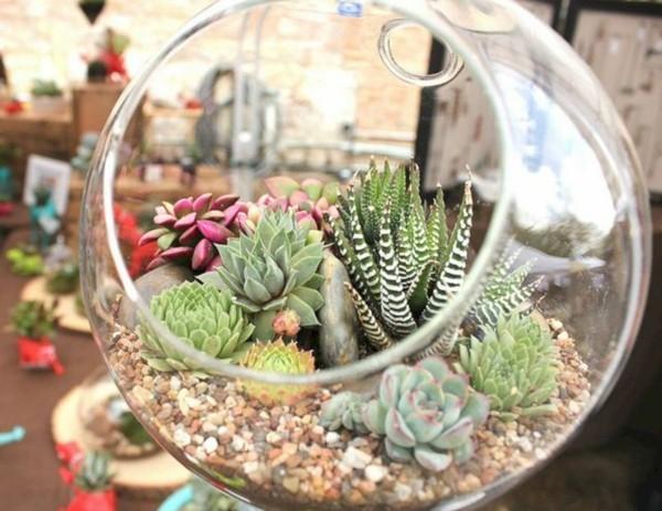pflanzen terrarium tolle dekorative wirkung