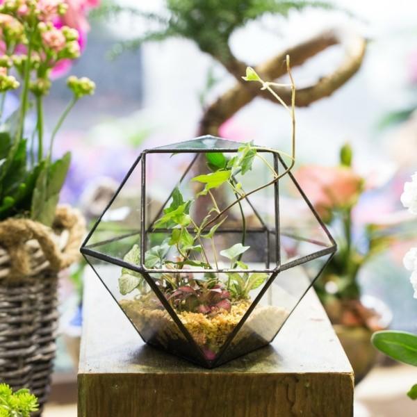 pflanzen terrarium tolle geometrische idee