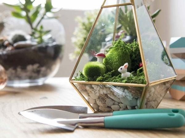 pflanzen terrarium verschiedene ecken