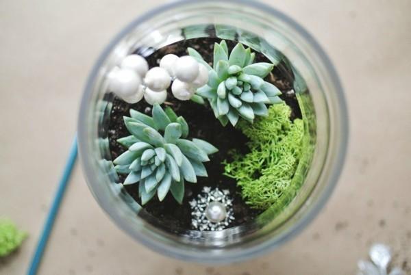 rundes glas pflanzen terrarium
