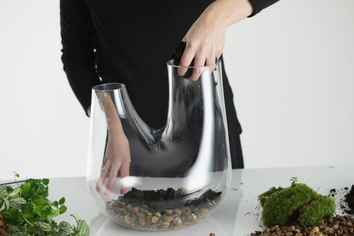 saubermachen Pflanzen Terrarium