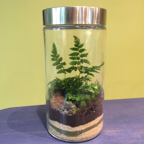 schönes glas pflanzen terrarium