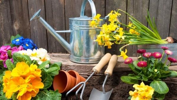 Frühlingsblumen draußen einpflanzen Gartenarbeit im März