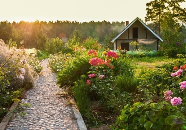 Gartenarbeit im März Rosen