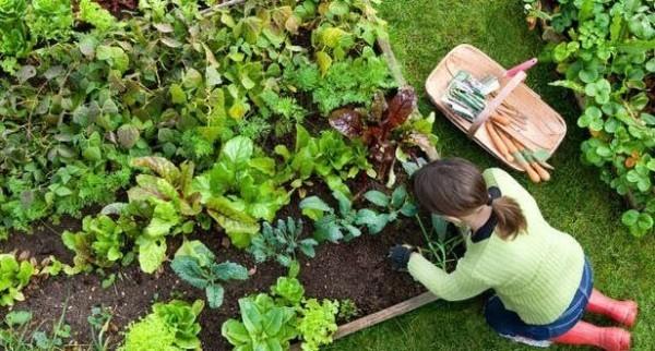 Gartenarbeit im März das Gemüsebeet ordnen frisches Gemüse haben