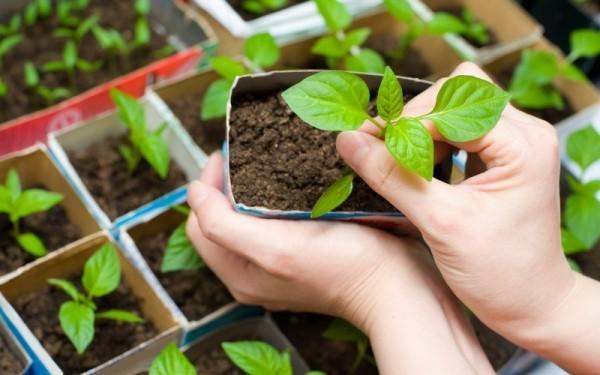 Gartenarbeit im März mit der Aussaat beginnen