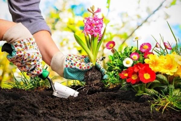 Gartenarbeit im März schöne Gartenblumen