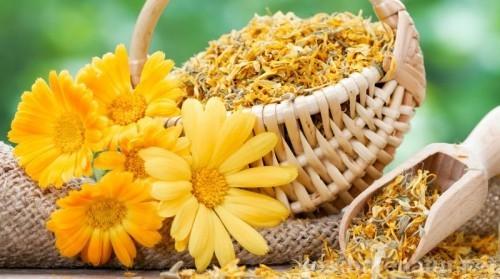 Gelbe Ringelblumen Gartenpflanzen