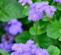 Gartenpflanzen und Küchenkräuter, die im Sommer die Mücken fernhalten