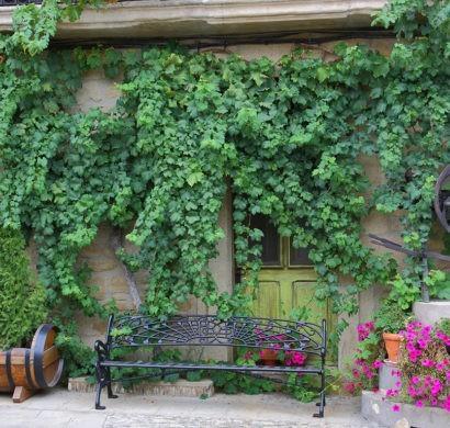 kletterpflanzen schnellwachsende und bl hende reben f r. Black Bedroom Furniture Sets. Home Design Ideas
