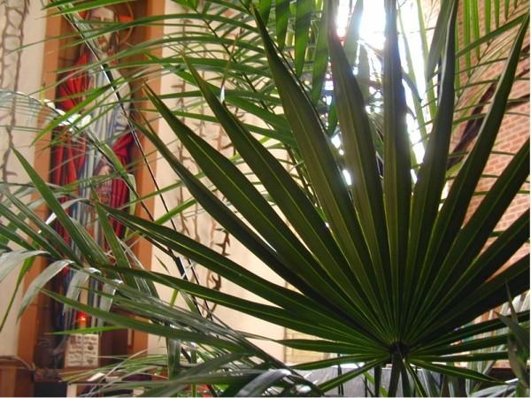 Palmen früher heilige Bäume
