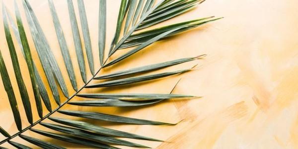 Palmsonntag feiern Palmzweige heute dekorative Aufgaben