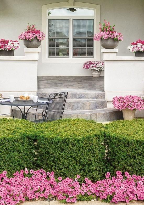 Schöne Topfpflanzen Petunien vor dem Haus rosa Blüten Blickfang