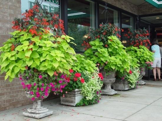 Topfpflanzen herrliche Blütenpracht bewundern wortlos