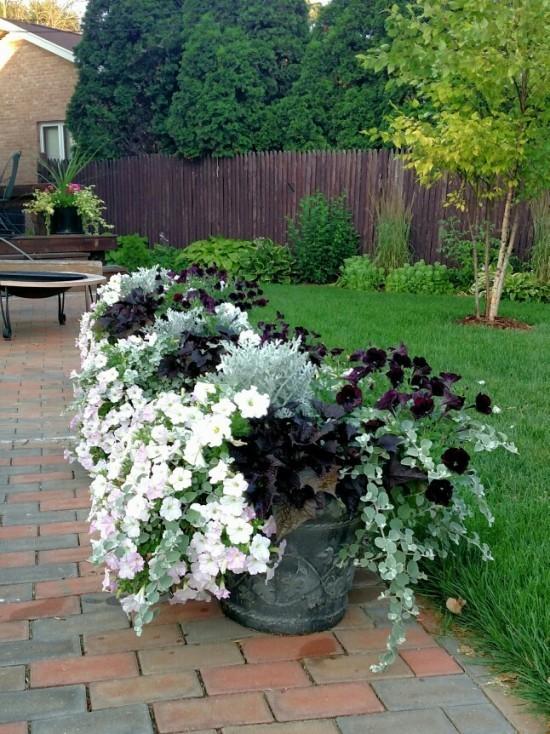Topfpflanzen weiße Blüten Petunien