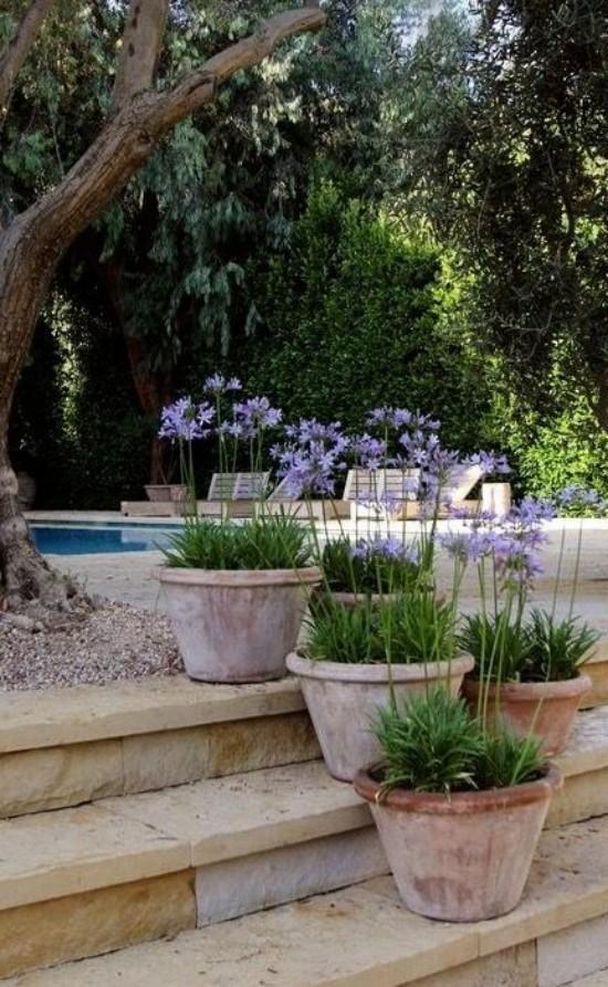 Topfpflanzen zarte Verbenen schmücken Gartenbereich