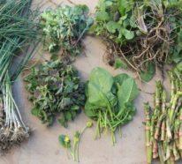 10 essbare Wildpflanzen, die man schon im Frühjahr ernten kann