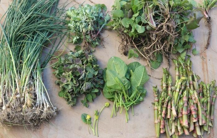 baerlauch essbare wildpflanzen bestimmen mix