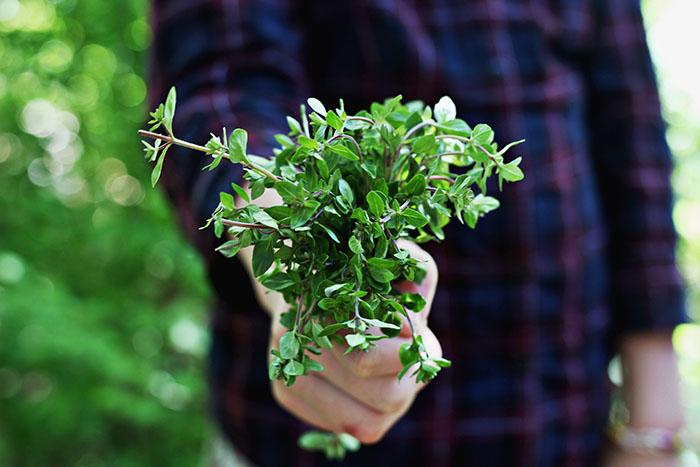 essbare wildpflanzen baerlauch bund
