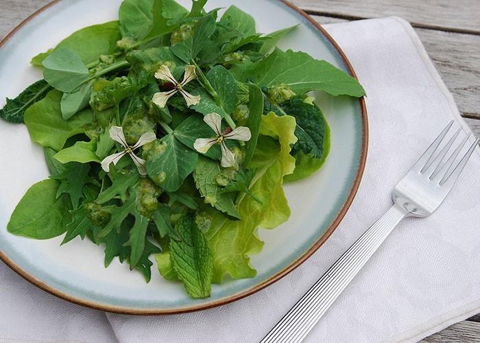 essbare wildpflanzen frischer salat ahorn