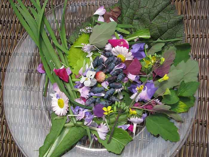 essbare wildpflanzen frischer salat gaensebluemchen