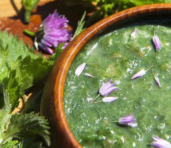essbare wildpflanzen frischer salat hohlzahn mahlzeit