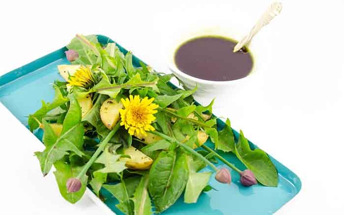 essbare wildpflanzen frischer salat loewenzahn mit dressing