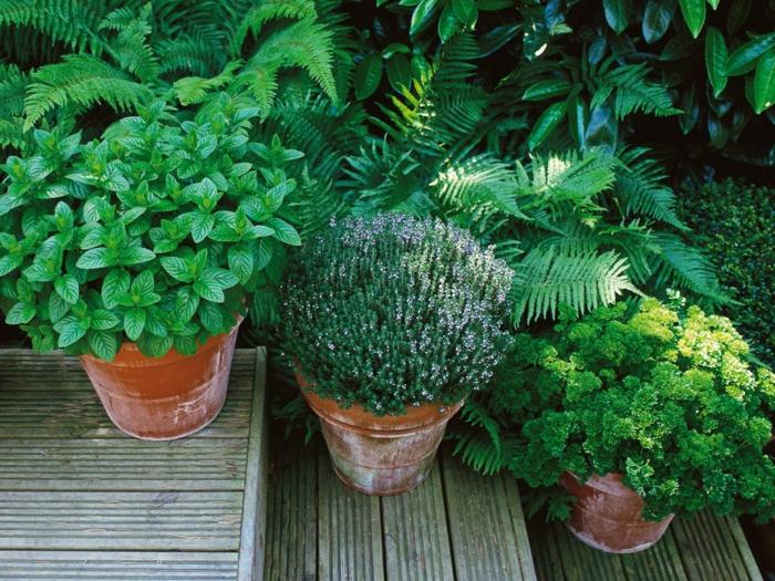 gemuesegarten anlegen blumenkaesten heilkraeuter