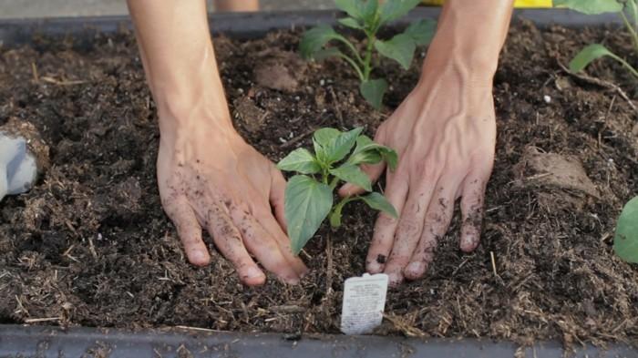 gemuesegarten anlegen blumenkaesten pflanze