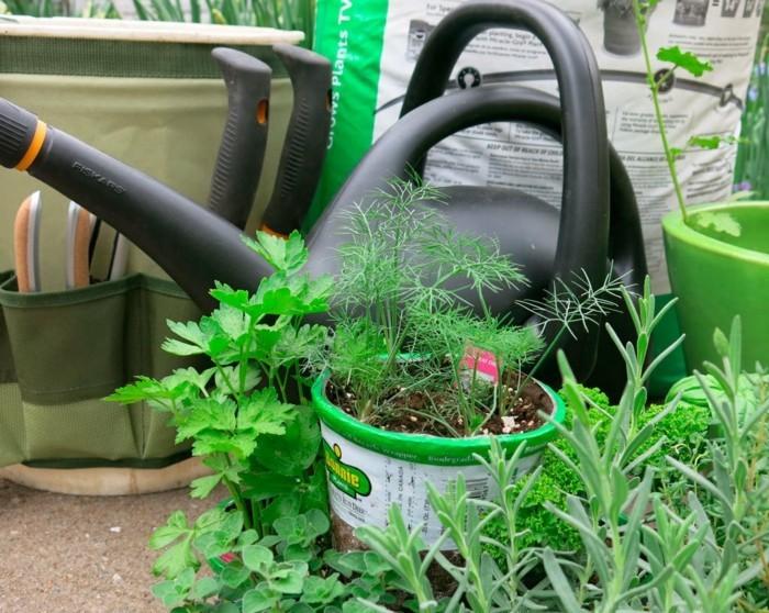 gemuesegarten anlegen blumenkaestenz kuechenkrauter
