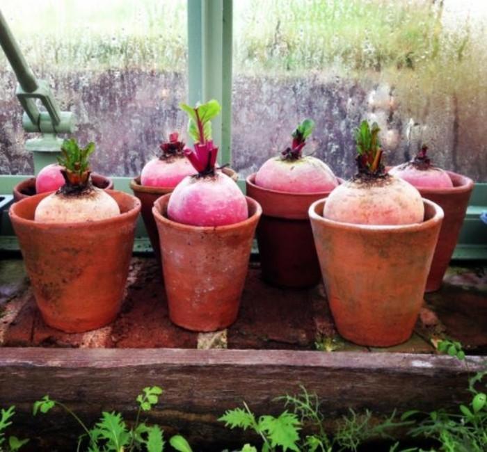 gemuesegarten anlegen blumenkaestenz rote beete