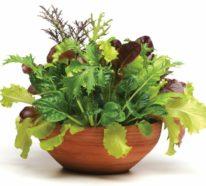 Blumenkästen bepflanzen und erfolgreich den eigenen Gemüsegarten anlegen