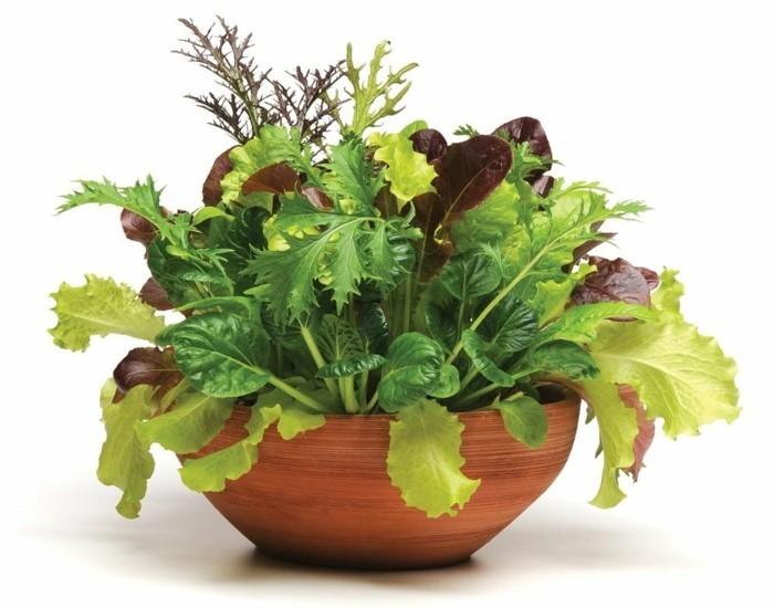 gemuesegarten anlegen blumenkaestenz salate