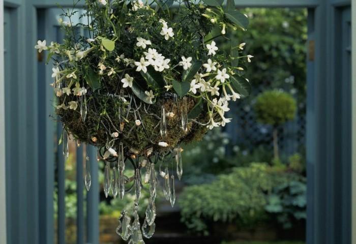 Jasmin Zimmerpflanze Kubelpflanze Schone Hangedeko