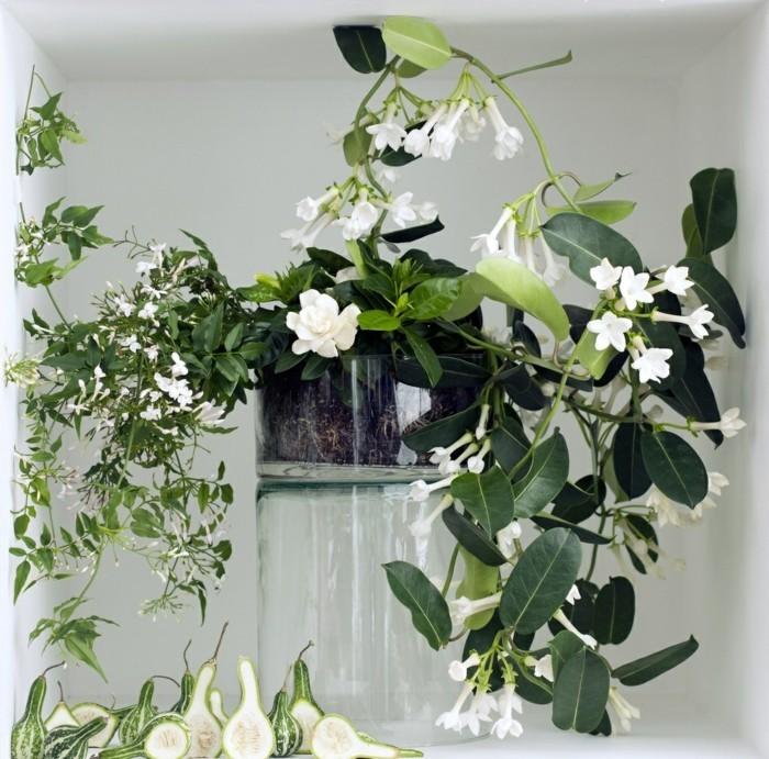 Jasmin Zimmerpflanze Pflanzkubel Dekoideen Pflanzen