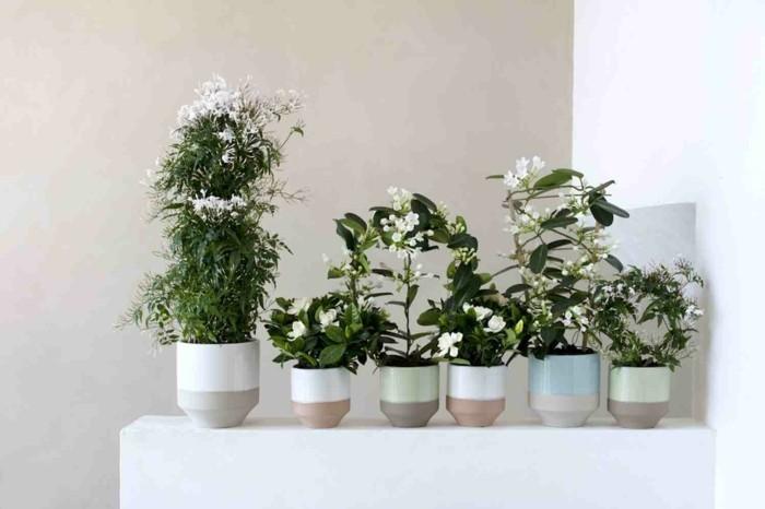 jasmin zimmerpflanze ein gr ner hingucker zu hause. Black Bedroom Furniture Sets. Home Design Ideas
