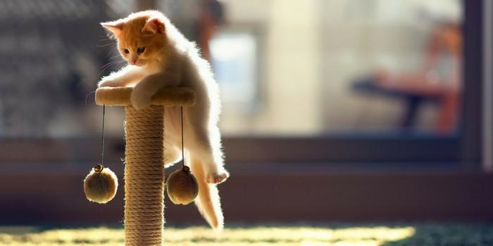 katzenspielzeug basteln katzenbaum kleine katze