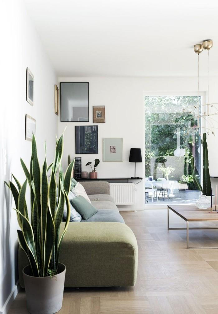 pflanze mit großen blättern bogenhanf wohnzimmer dekorieren
