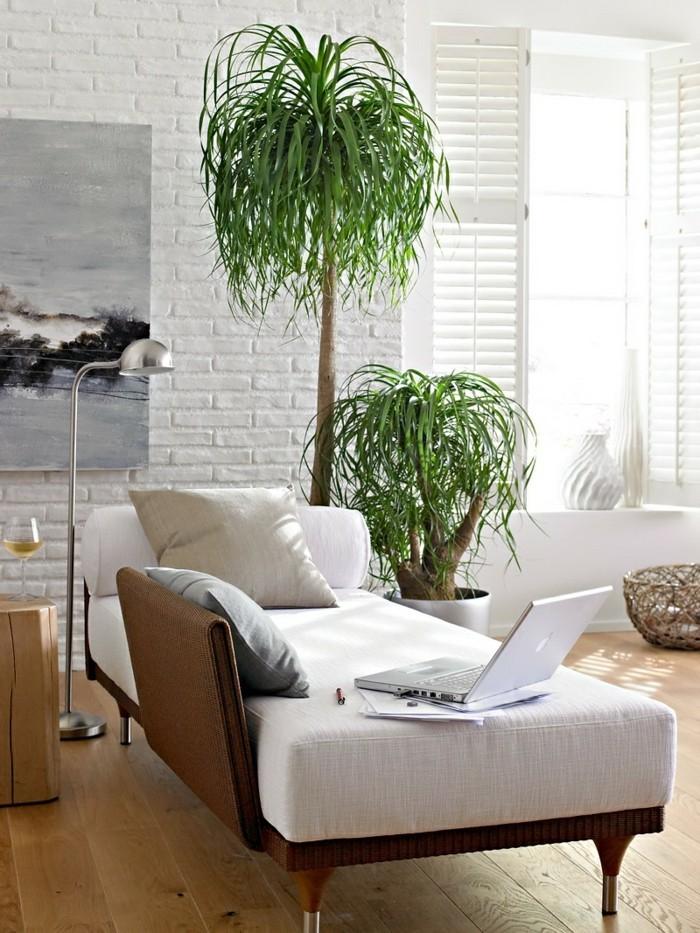 pflanze mit großen blättern elefantenfuß wohnzimmer ideen