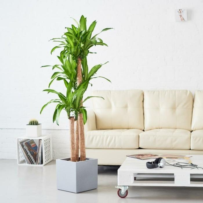 pflanze mit großen blättern elegante dekoidee moderner wohnbereich