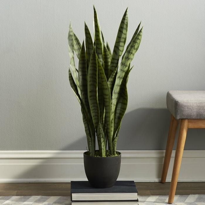 pflanze mit großen blättern elegante zimmerdeko frisch