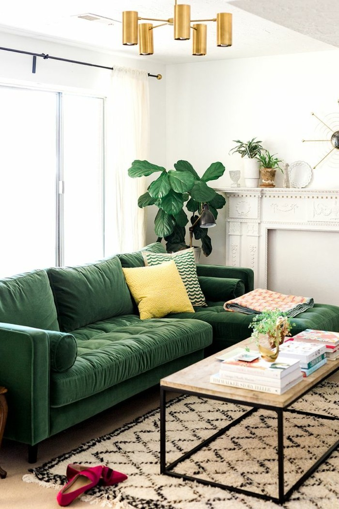 pflanze mit großen blättern grünes sofa